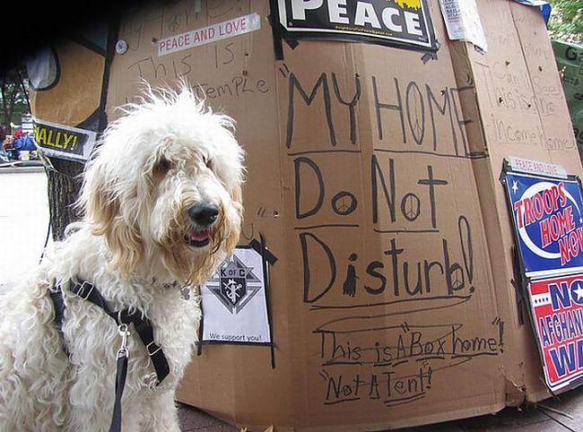 Autors: MiersBerzins Suņi okupē Wallstrītu