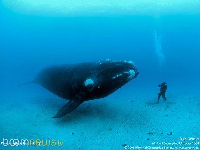 Autors: Pedomouse Jūs gribētu noķert tādu zivi?