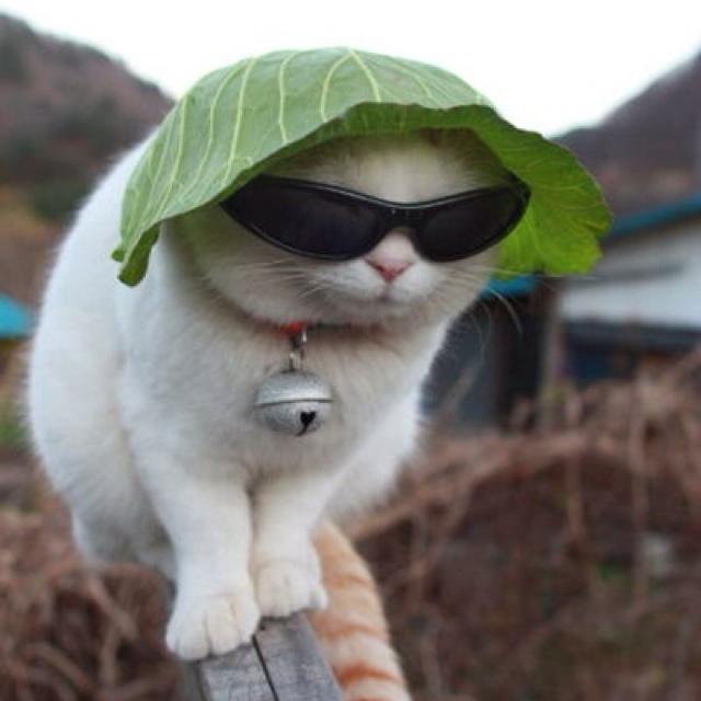 Autors: ZīlīteAwww Es mīlu kaķus!*