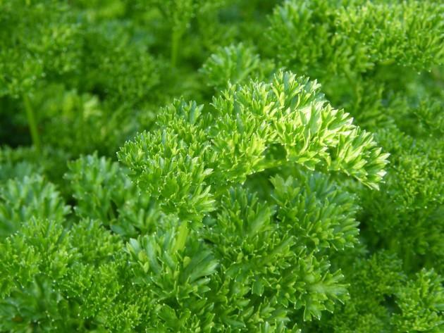 Lapu salāti un zaļumi  Lielākā... Autors: Fosilija 10 produkti, kuri palīdz justies labāk.