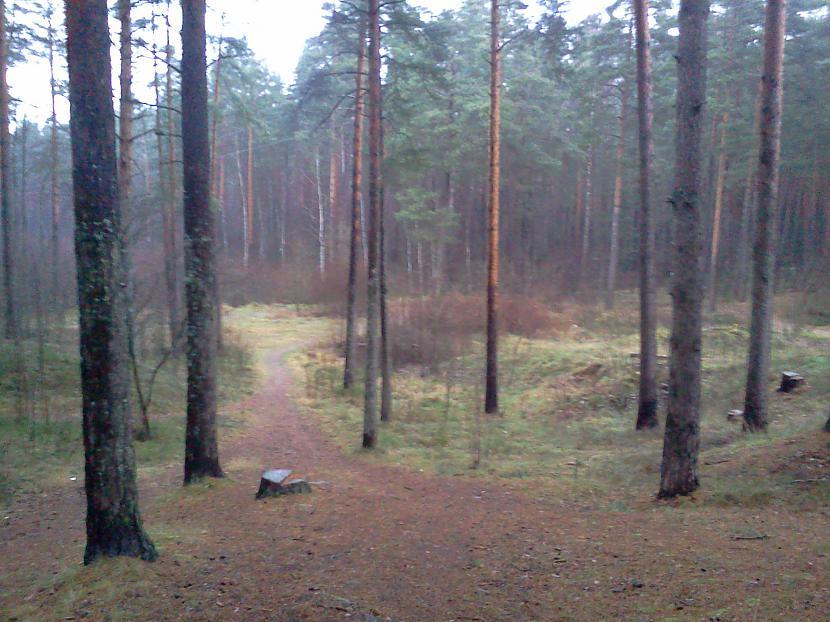 Sāksim ar čāpājienu iekšā mežā... Autors: Xinjsh Pastaiga