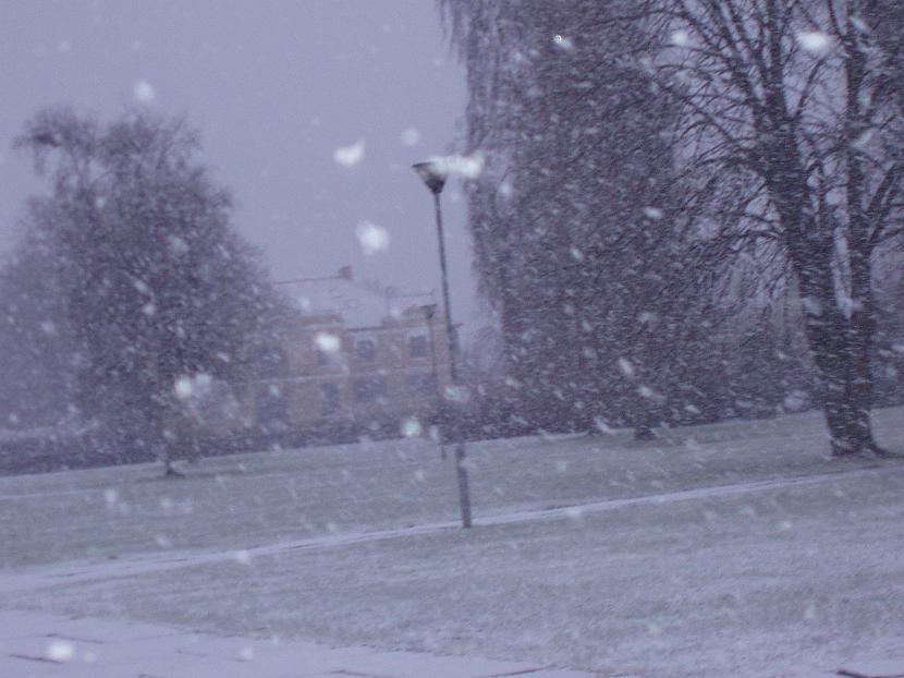 Autors: Fredia Varat iedomāties ? Sniegs !