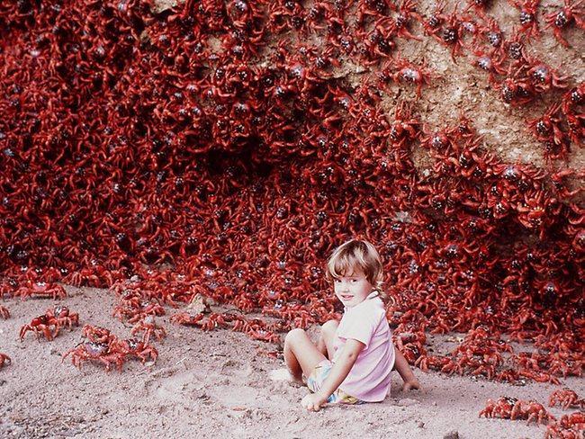 Ziemassvētku salas krabju... Autors: aģents 007 Skaisti attēli