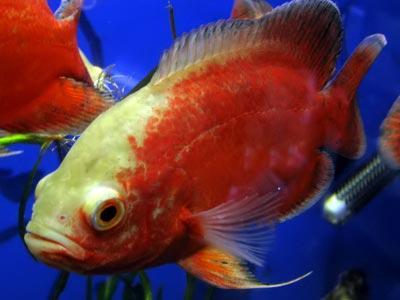 Zivis Domā  ka neviens... Autors: meitēnsss Iespējams īsākais horoskops.