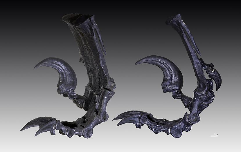 Deinonika nags Autors: sekers Skeletori 2