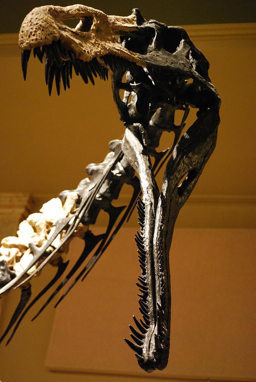 Suhomims Autors: sekers Skeletori 2
