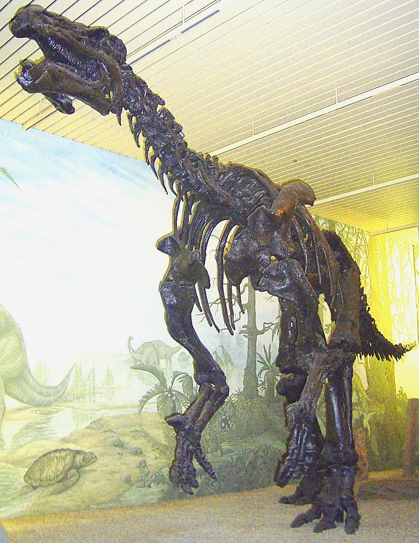 Iguanodons Autors: sekers Skeletori 2
