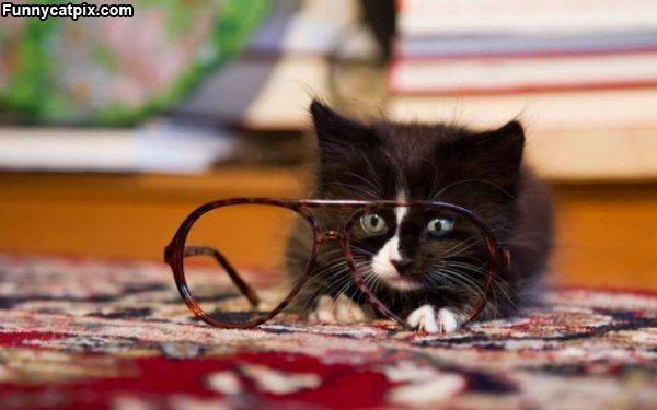 Autors: Ediiijsss Mīļākie kaķīši pasaulē....