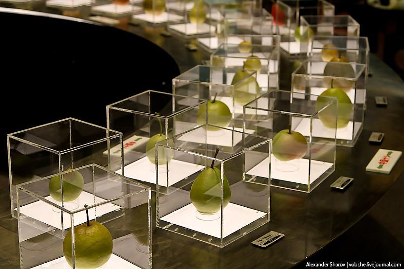 Autors: Eiropa Bumbieru muzejs