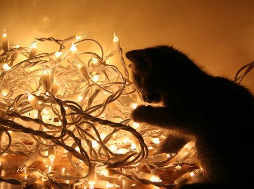 Autors: Fosilija Ziemas pārdoma...