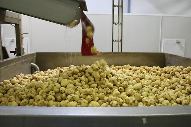 Autors: papaija Ādažu čipsu rūpnīca