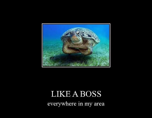 Autors: šokolapsa like a boss