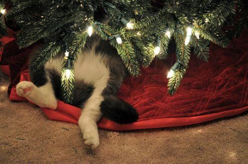 Autors: Rolix322 Kaķi Ziemassvētku noskaņās