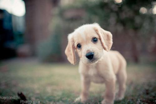 dog Autors: Lincho Some animals=)