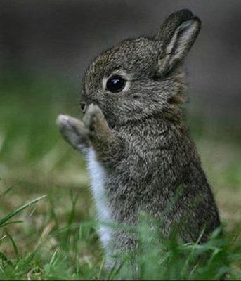 Autors: 4moknutaja Little cute animals...