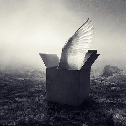 Autors: Fosilija Eņģelis.