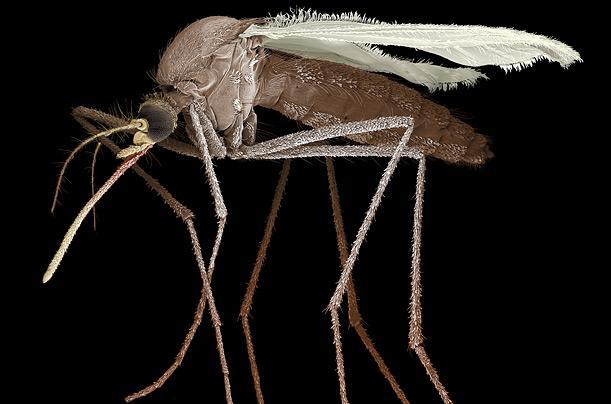 Nāvējošākais dzīvnieks ... Autors: Fosilija Dzīvnieki ar neparastām spējām!