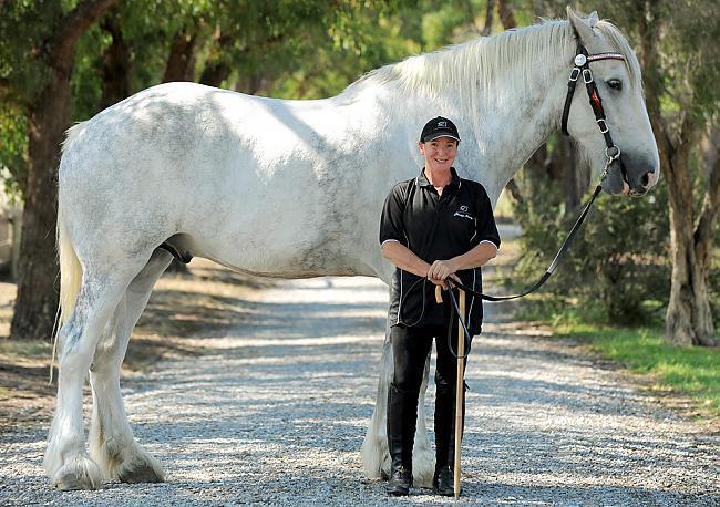 Pasaulē garākais zirgs 206m... Autors: Edgarinshs Interesantie rekordi