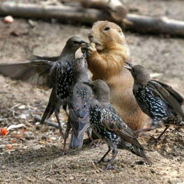 Autors: Edgarinshs Putnu uzbrukumi
