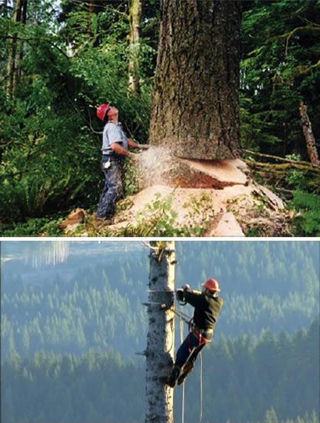 MežcirtējiASV mežcirtēji... Autors: Laur1s Bīstamākie darbi pasaulē