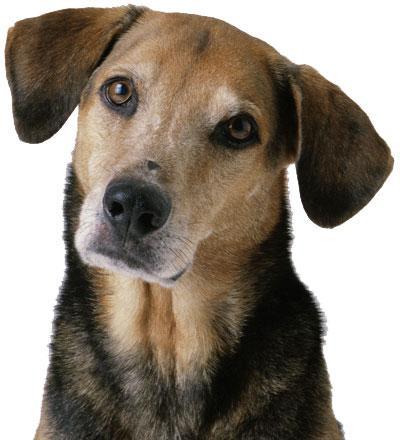 foršs suns Autors: angelus3D skaisti dzīvnieki 3 (sunīši)