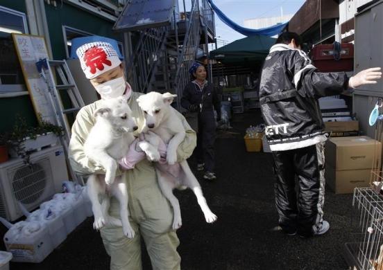 Fukushima pēc pagājušā gada... Autors: Jeims0n Pazudušie dzīvnieki no Fukushimas