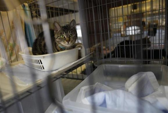 Autors: Jeims0n Pazudušie dzīvnieki no Fukushimas