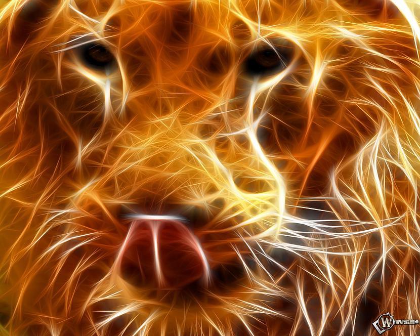 Autors: keitakate01 Krāsas, daba, dzīvnieki..