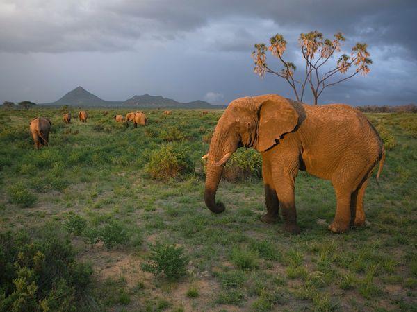 Ziloņu aplūkoscaronana Samburu... Autors: Fosilija 10 Interesantas tūrisma vietas !!!