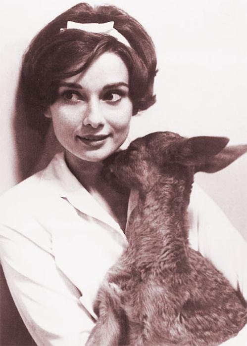 The best thing to hold on to... Autors: serenasmiles Audrey Hepburn bildēs un citātos.