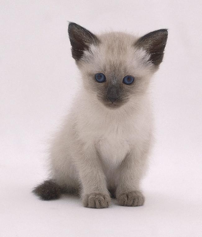 10 Autors: momoo999 kaķu milētājiem 2