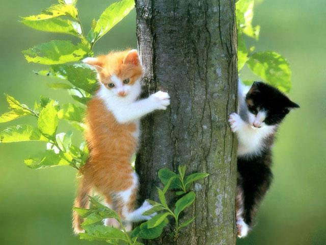 6 Autors: momoo999 kaķu milētājiem 2