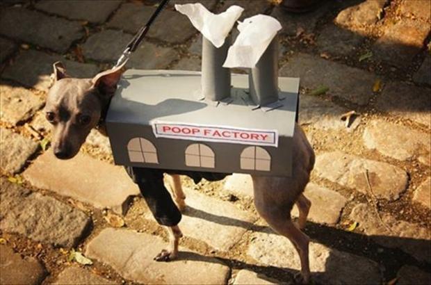 Autors: Fosilija Dzīvnieki ,kas līdzinās uzvedībā cilvēkiem !