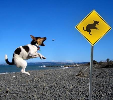 Autors: luvazhels Smieklīgas Suņu Zīmes!!!
