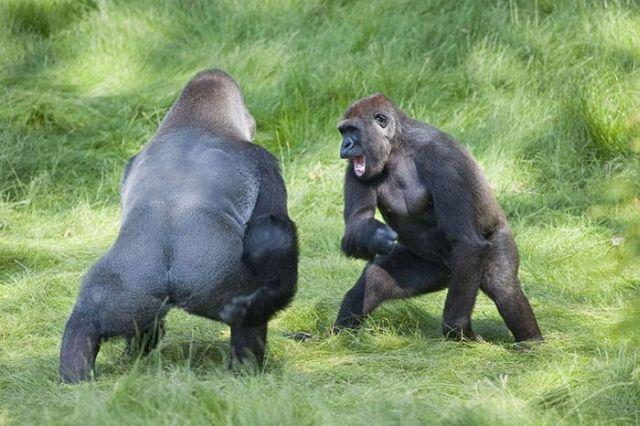 Tagat abi pērtiķi dzīvo kopā... Autors: Universal7 Ģimenes Atkalapvienošanās :)