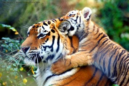httpbabyanimalzcomnbspDzīvniek... Autors: Lelliiic 22 lietas,ko darīt internetā! #2