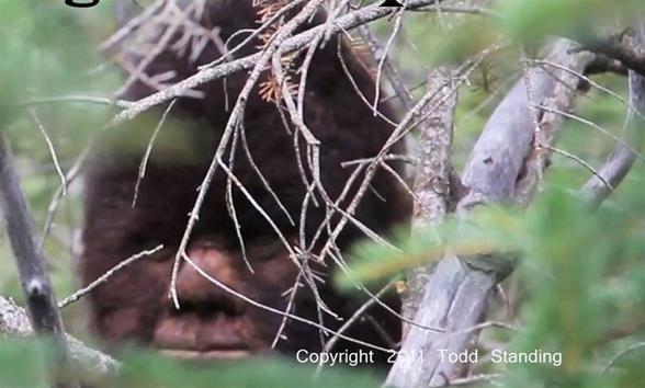 Autors: raichluuzers Bigfoot jeb sniegacilvēka seja