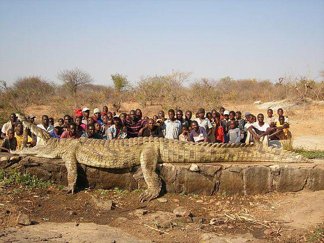 Scaronis Krokodīlsnbspir 22... Autors: chupaCHUPSnr1 Interesanti pasaules rekordi...