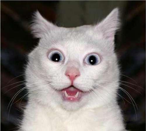 Kaķis scaronoka  Autors: gopniks2 Smieklīgie kaķi !