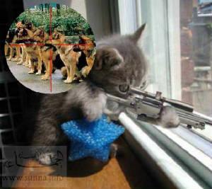 Suņiem beigas  Autors: gopniks2 Smieklīgie kaķi !
