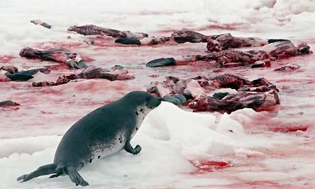 un roņiem ir bari pulkitie jūt... Autors: angelus3D vajedzētu iedziļināties