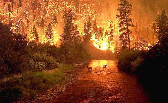 Mežu ugunskrēki pārvietojas... Autors: Degnams Faktiņi