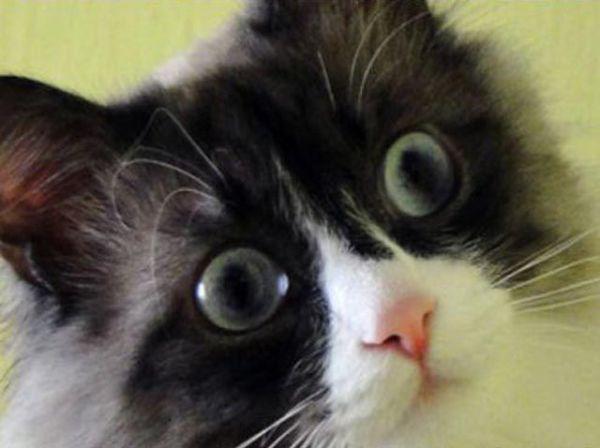 Autors: Agresija Kaķis panikā
