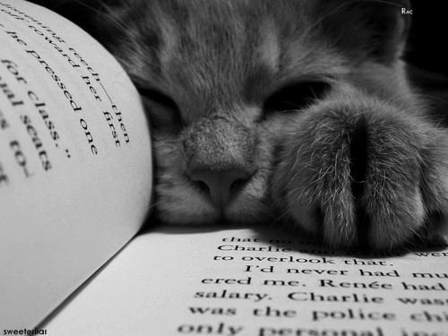 Autors: chillpanda Darling, you'll be fine.