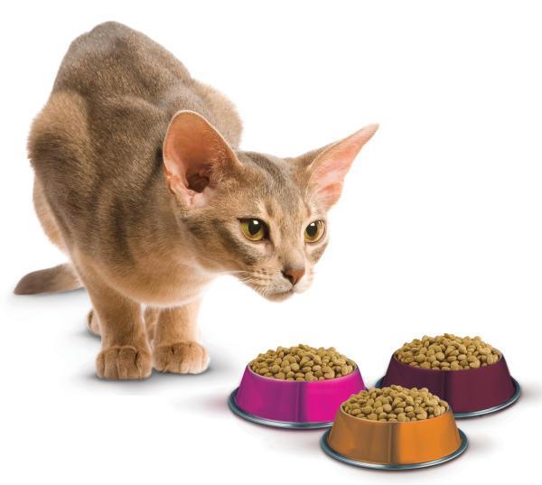 Kaķi nav jāuzskata par ļoti... Autors: Kaprālis Fakti par kaķiem