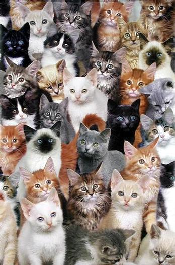 Lionas Francija universitātes... Autors: Kaprālis Fakti par kaķiem