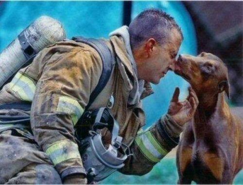 Autors: 8 Brīdis, kad dzīvnieki tiek glābti!