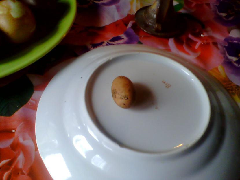 """Un lūk Te tā ir quotLielāquot... Autors: Fosilija """"Lielā"""" ola"""