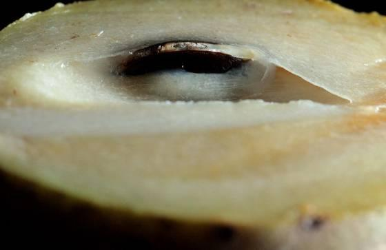 Sapodilla chikuahranbsp... Autors: Deadshot 10 interesantāki augļi uz zemes