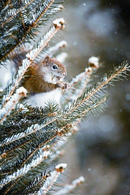 Autors: Maryllin white snow*